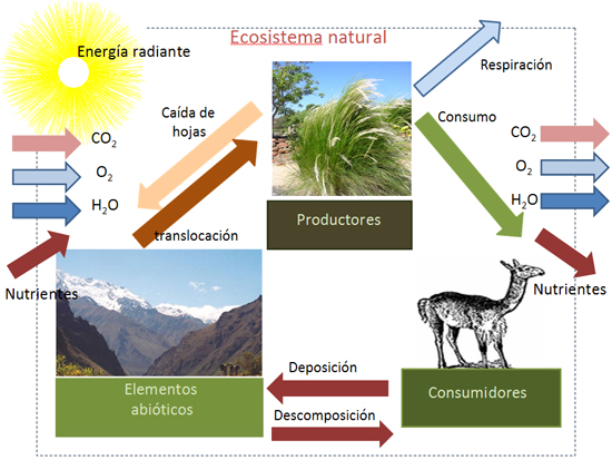 ecosistema natural