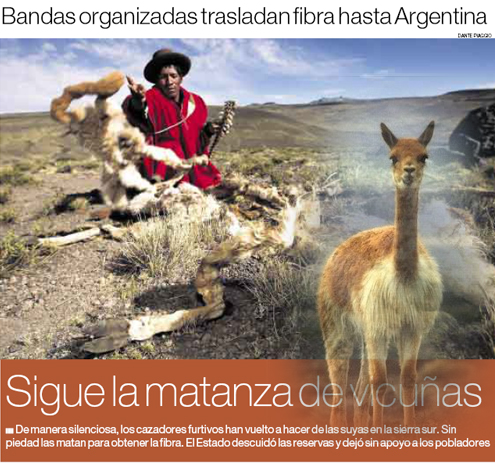 vicuñas copy